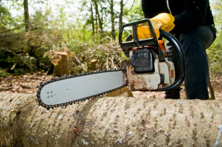 How To Hire A Tree Surgeon?