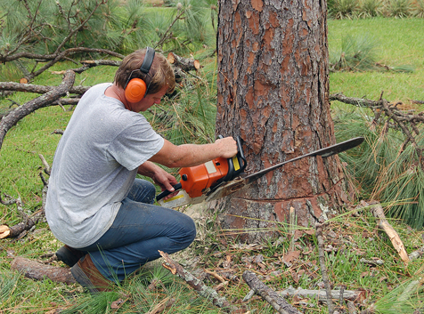 Services Offered By Arborists