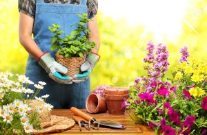 Tips To Designing Your Garden